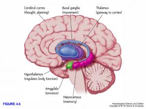 wat-depressie-met-onze-hersenen-doet